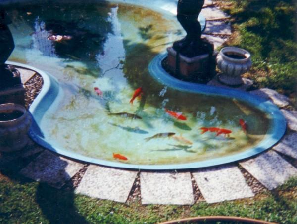 Le point blanc et la mousse chez le poisson rouge et for Bac plastique poisson rouge
