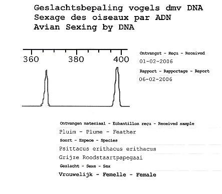 Sexage ADN chez le perroquet